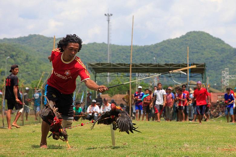 Barapan Ayam atau Sampo Ayam