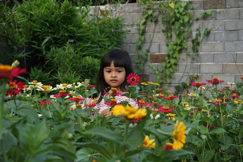Photo of Nuansa Taman Bunga Akan Menjadi Daya Tarik Destinasi Digital Baru di Pulau Lombok